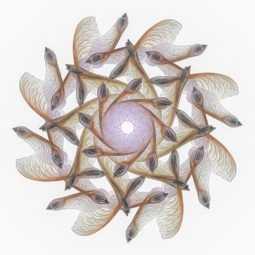 Элизабет Казда - Мандала с кленовыми самарами.