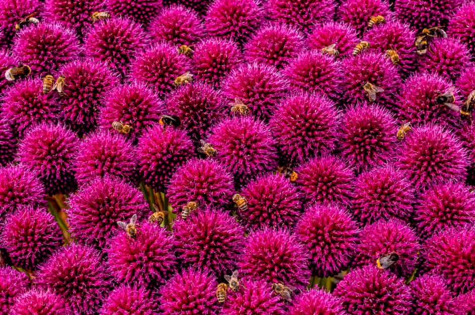Стив Палмер - Занятые пчелы