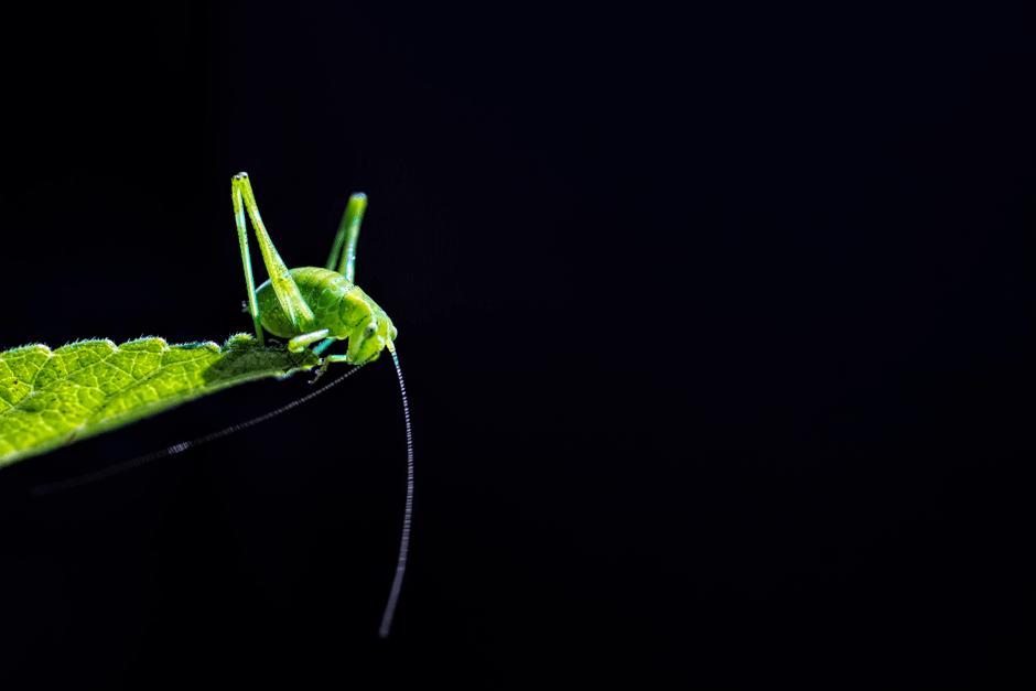 Эллиот Коннор - Светящийся зеленый