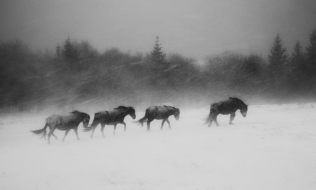 В сердце зимы, © Иван Миладинов / Ivan Miladinov, Болгария, 2 место в номинации «Чёрно-белое», Фотоконкурс 35AWARDS — 100 Best Photos