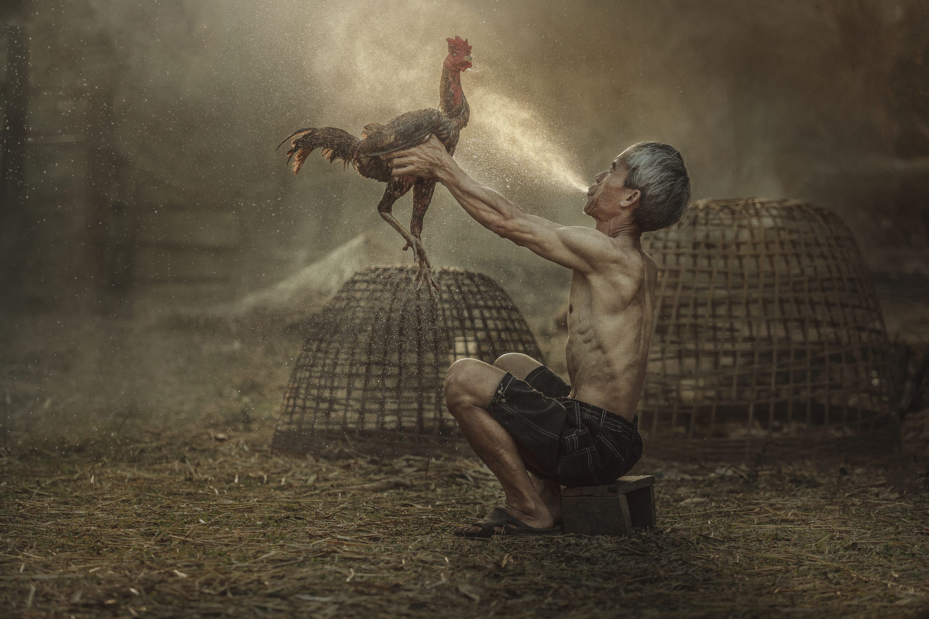 Человек, убирающий тайского бойцового петуха, © Жаккри Тампитаккулл / Jakkree Thampitakkull, 2 место в номинации «Портрет», Фотоконкурс 35AWARDS — 100 Best Photos