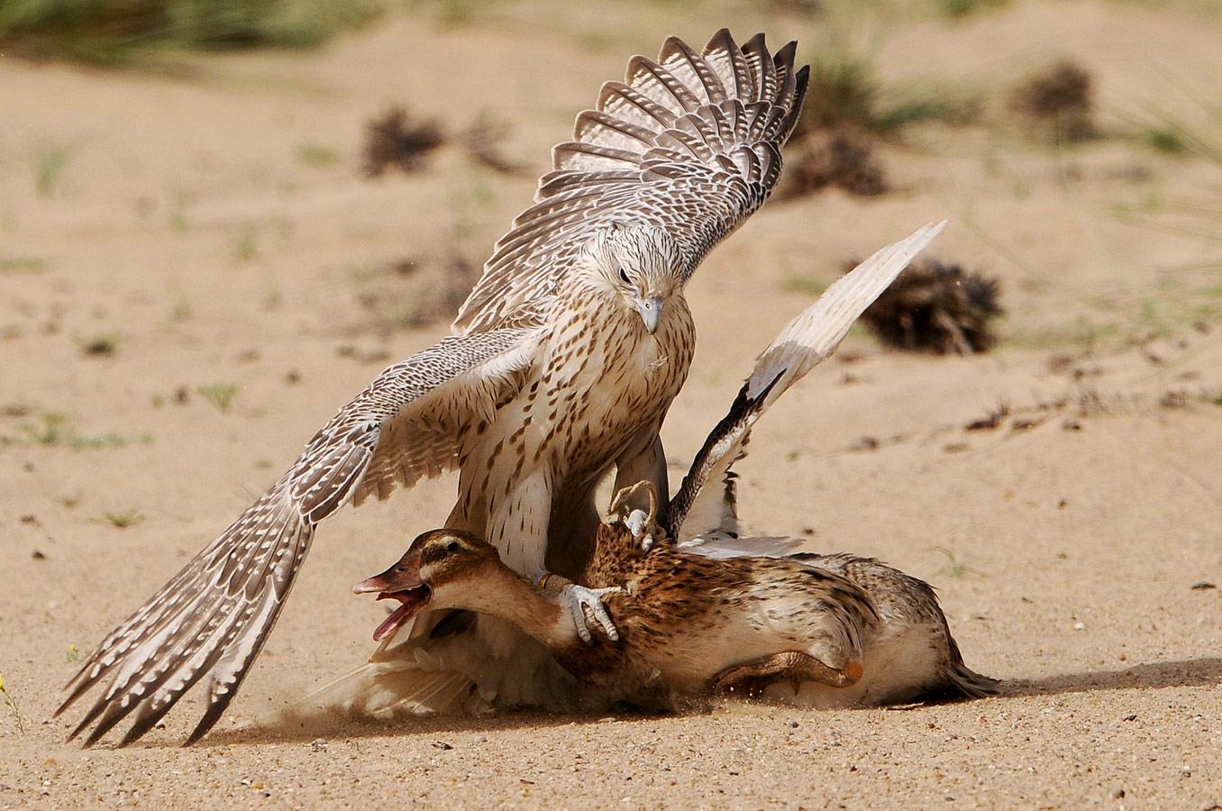 Птичья премудрость, © Саад Альфархан / Saad Alfarhan, Турция, 3 место в номинации «Живая природа», Фотоконкурс 35AWARDS — 100 Best Photos