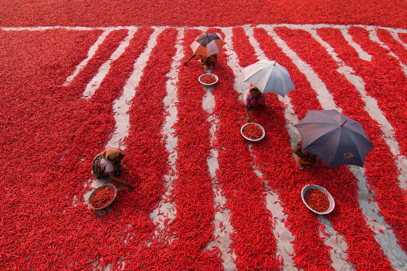 Сборщики красного перца, © Азим Хан Ронни / Azim Khan Ronnie, Бангладеш, 1 место в номинации «Уличная фотография», Фотоконкурс 35AWARDS — 100 Best Photos
