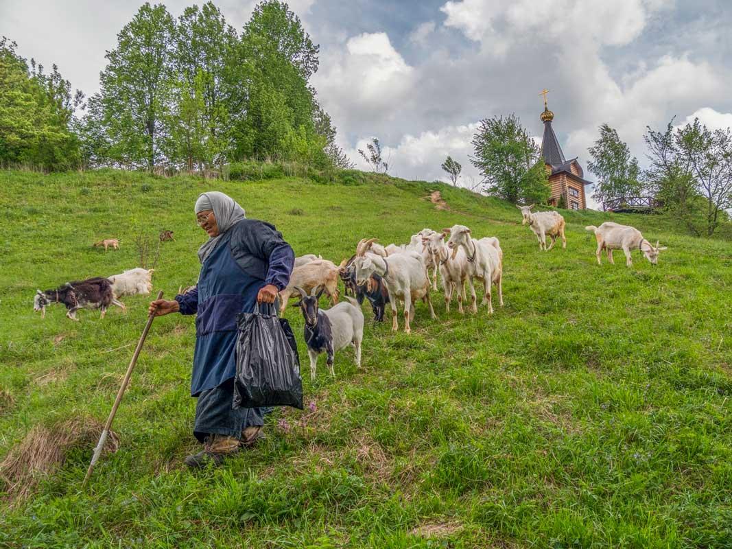 Виталий Подгурченко «Пастушка», Малоярославец, 2021