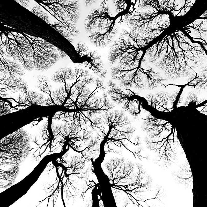 Измайловский парк, фото А. Домрачева