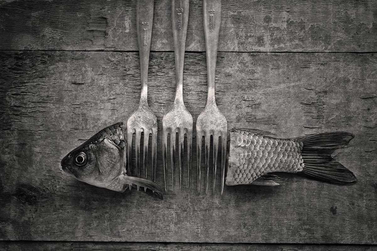 """""""Это не рыба"""", фото А. Ковязина"""