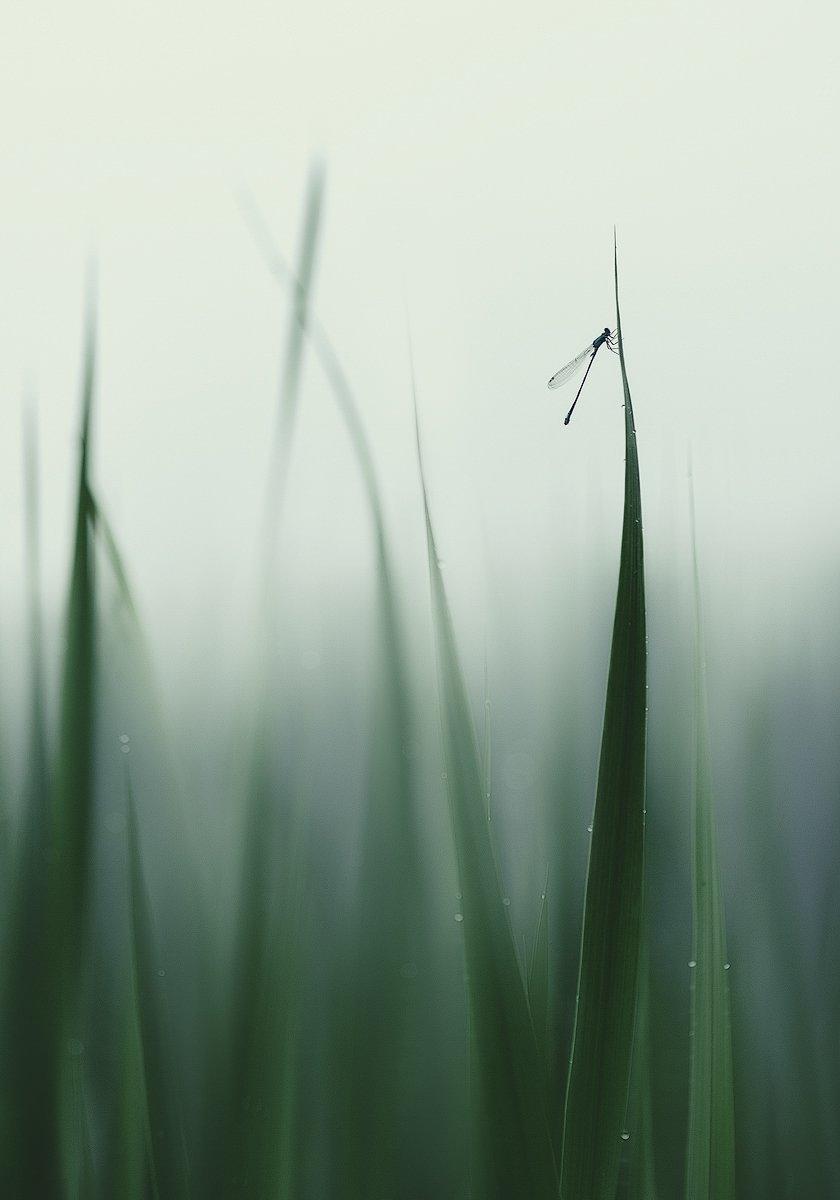 Среди уснувших трав..., фото О. Чорного