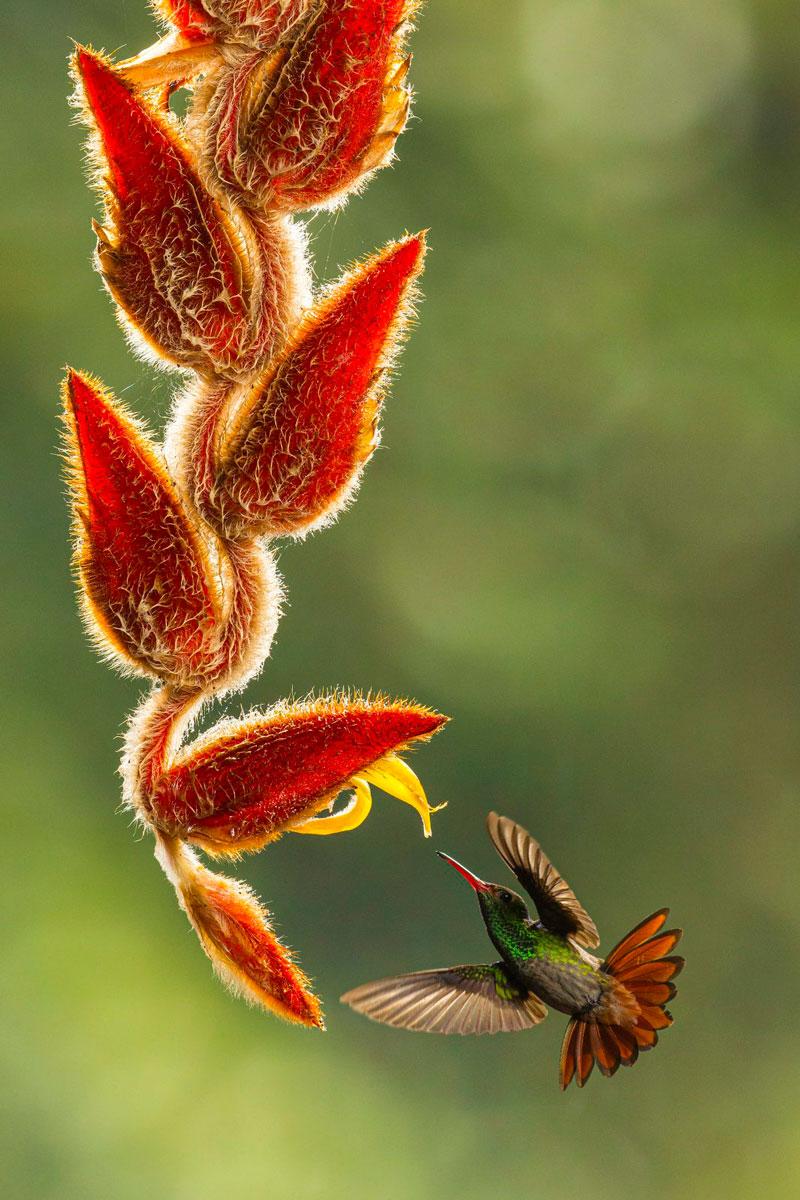 """""""Летающая жемчужина"""", © Кэт Эдвардс (Великобритания)"""