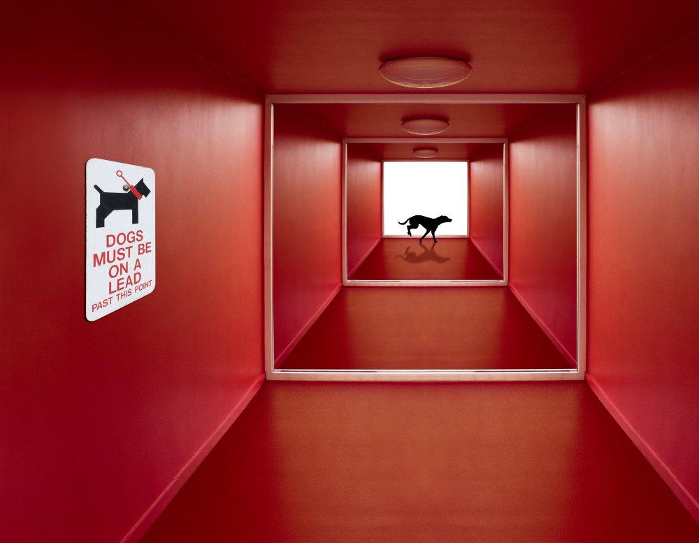 Жаклин Хаммер / Jaqueline Hammer, Победитель в категории «Креативный монтаж», Фотоконкурс 1x Photo Awards