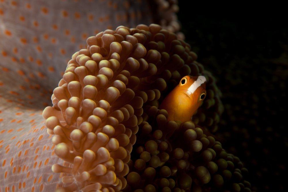 Шерри / Sherry, Выбор зрителей в категории «Природа», Фотоконкурс 1x Photo Awards