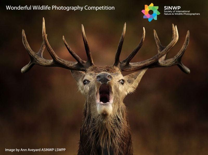 Фотоконкурс «Замечательный мир дикой природы» от SINWP
