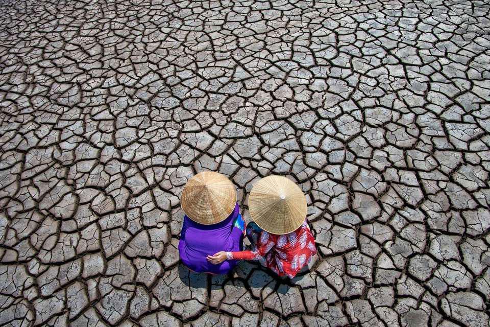 Засушенные дамы, Чин Леонг Тео | Сингапур