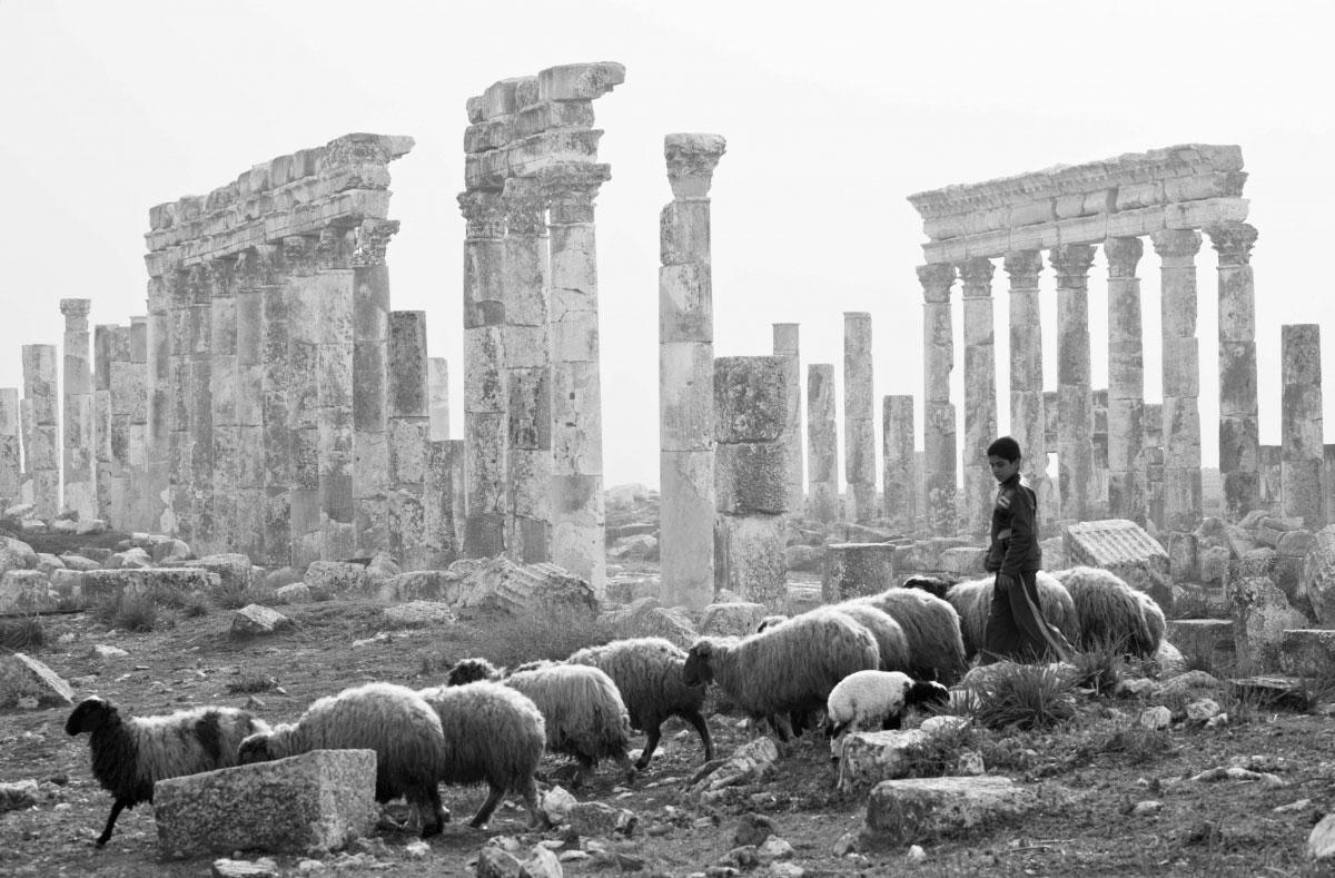 «По главной улице. Апамея. Сирия», Александр Дымников