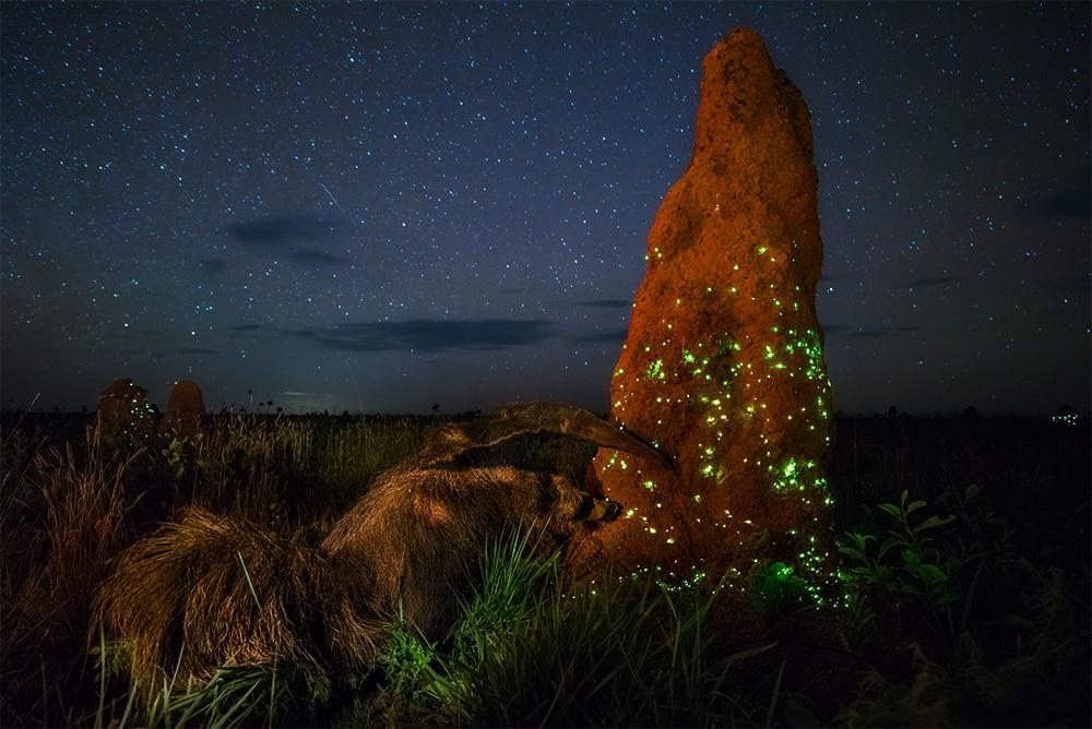 Экосистема, © Марсио Кабрал / Marcio Cabral, Бразилия, Победитель в категории «Наземная дикая природа», Фотоконкурс BigPicture