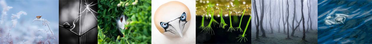 Фотоконкурс British Wildlife Photography Awards