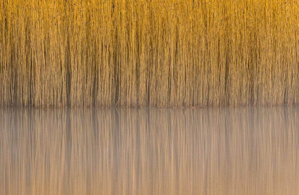 © Стив Палмер / Steve Palmer, Тростник, Линдоу, Уилмслоу, Чешир, Wiiner в категории «Ботаническая Британия», Фотоконкурс British Wildlife Photography Awards