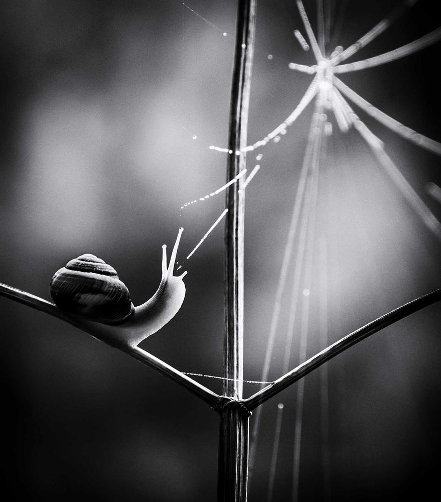 © Паула Купер / Paula Cooper, Паутина жизни, Тетфорд Форест, Норфолк, Победитель в категории «Британская природа в черно-белом», Фотоконкурс British Wildlife Photography Awards