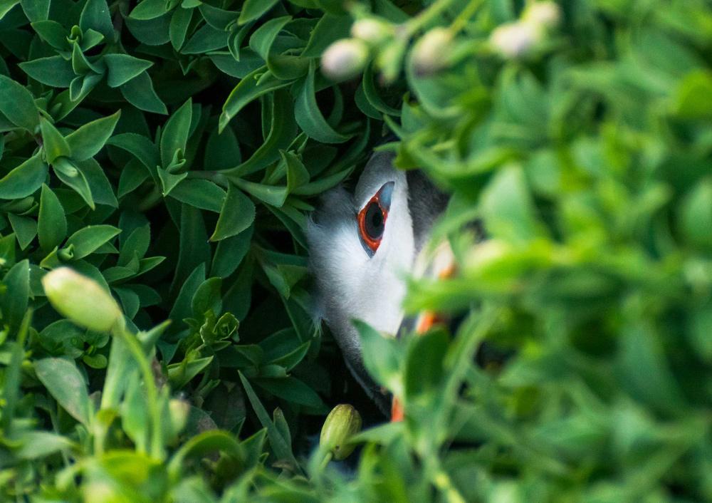 © Оливер Тисдейл / Oliver Teasdale (возраст 10 лет), Тупик в дыре, Остров Скокхольм, Пембрукшир, Победитель в категории WildPix — до 12 лет, Фотоконкурс British Wildlife Photography Awards