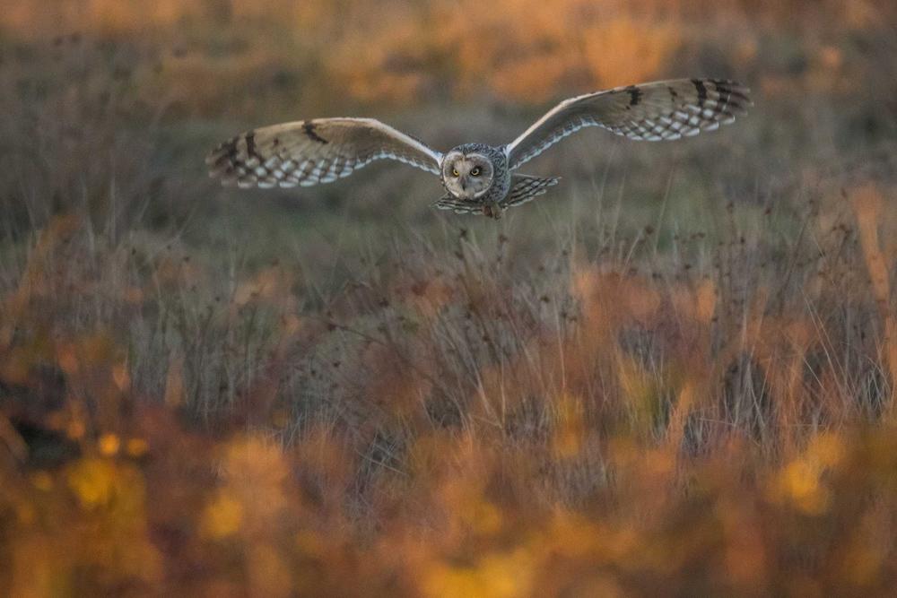 © Мэтью Роузвейр / Matthew Roseveare (возраст 18 лет), Золотой час охоты, Фарлингтон, Хэмпшир, Победитель в категории WildPix — 12–18 лет, Фотоконкурс British Wildlife Photography Awards