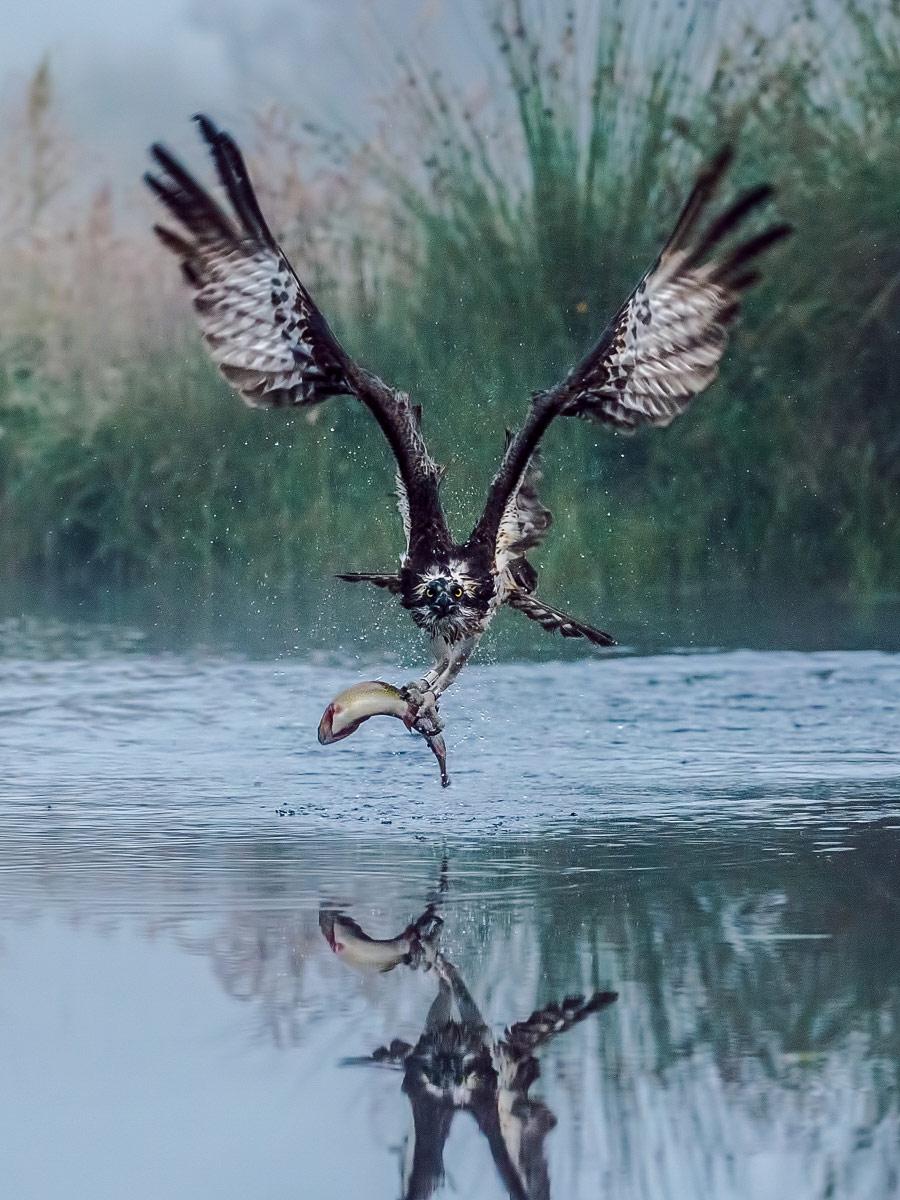 Джиллиан Ллойд, Великобритания / Gillian Lloyd, UK, Победитель в категории «Живая природа и животные» (профессионал), Фотоконкурс Chromatic Photography Awards
