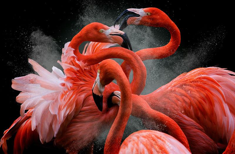 Педро Ярке, Испания / Pedro Jarque, Spain, Победитель в категории «Дикая природа», Фотоконкурс International Color Awards
