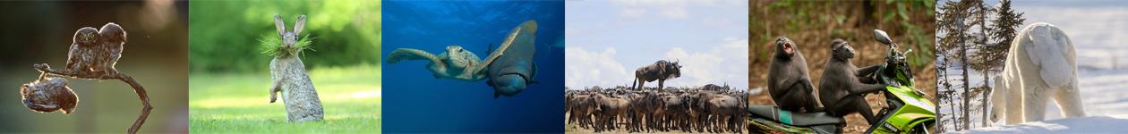 Конкурс фотографий Comedy Wildlife