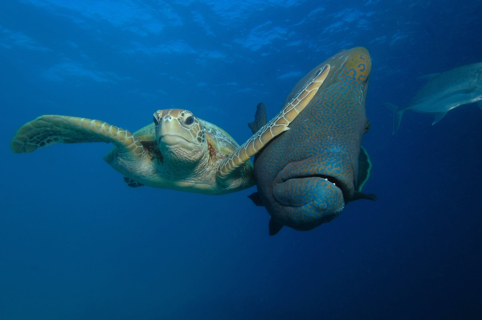 Трой Мейн / Troy Mayne, Победитель в подводной категории, Конкурс фотографий Comedy Wildlife