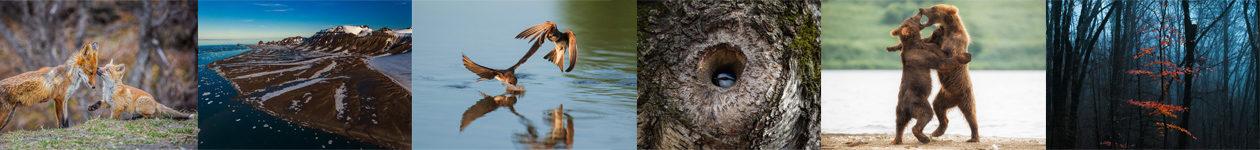 Фотоконкурс «Дикая природа России»