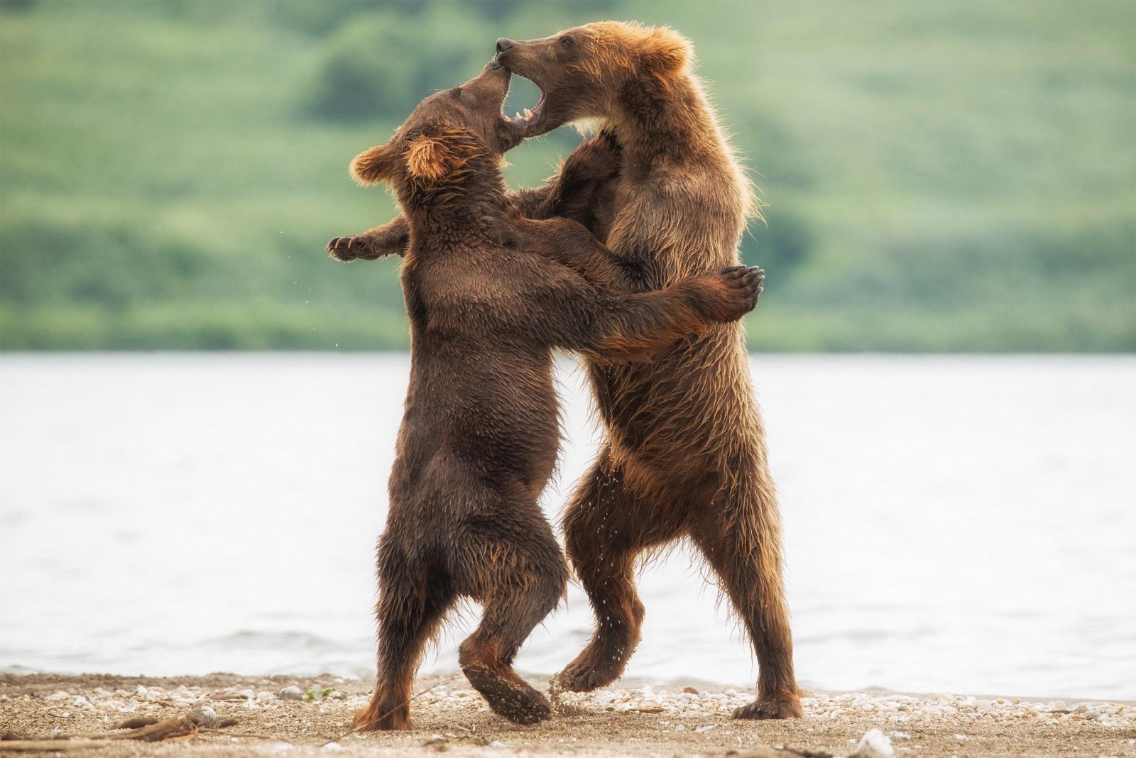 …как одно целое, Игорь Иванко, Млекопитающие, Фотоконкурс «Дикая природа России»