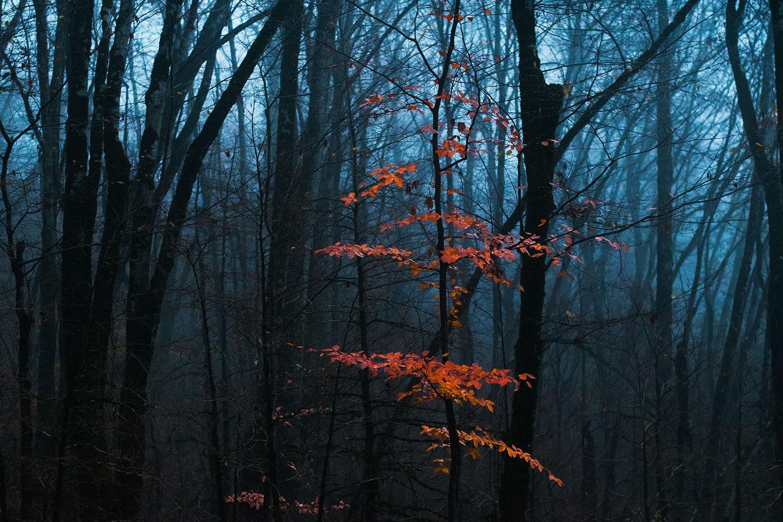 Последний акцент осени, Марина Остапенко, Юные таланты, Фотоконкурс «Дикая природа России»