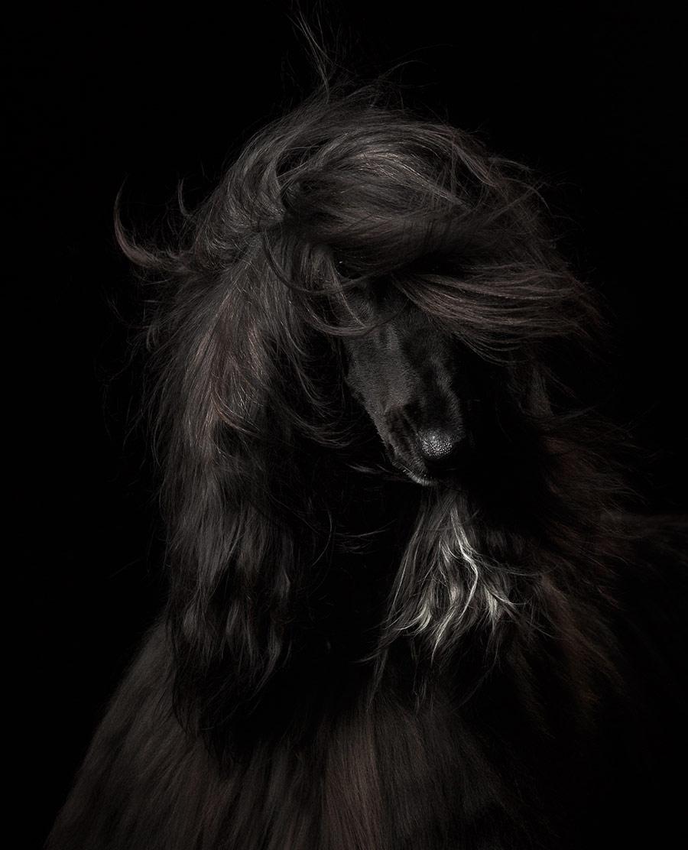 Анастасия Ветковская, Россия / Anastasia Vetkovskaya, Russia, Победитель в категории «Портрет», Фотоконкурс Dog Photographer of the Year