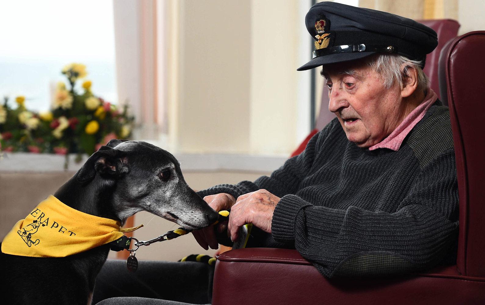 Аласдаир Маклеод, Великобритания / Alasdair Macleod, UK, Победитель в категории «Собаки помощники», Фотоконкурс Dog Photographer of the Year