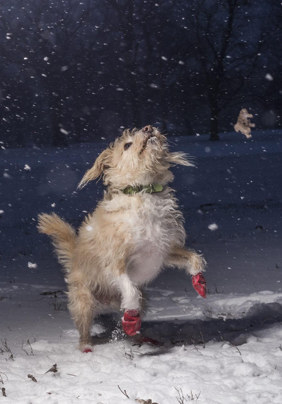 Джулиан Готфрид, США / Julian Gottfried, USA, Победитель в категории «Я люблю собак, потому что...» (возраст 12–17 лет), Фотоконкурс Dog Photographer of the Year
