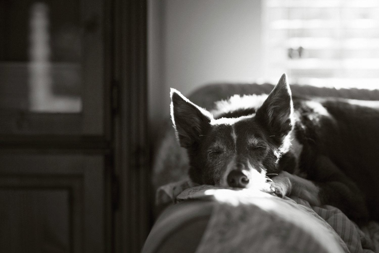 Джон Лиот, Великобритания / John Liot, UK, Победитель в категории «Старики», Фотоконкурс Dog Photographer of the Year