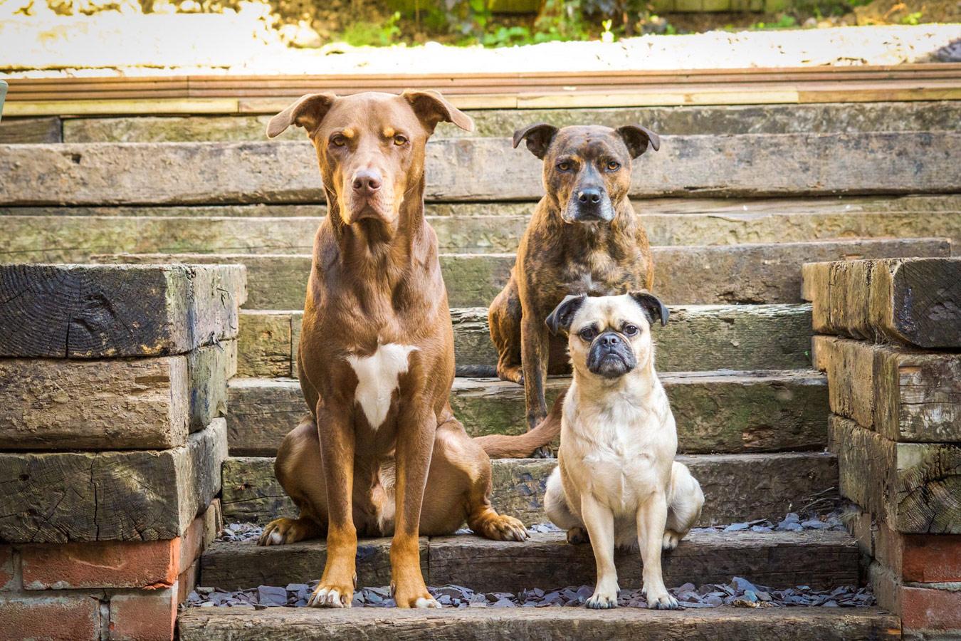 Виктория Уоттс, Великобритания / Victoria Watts, UK, Упоминание жюри, Фотоконкурс Dog Photographer of the Year