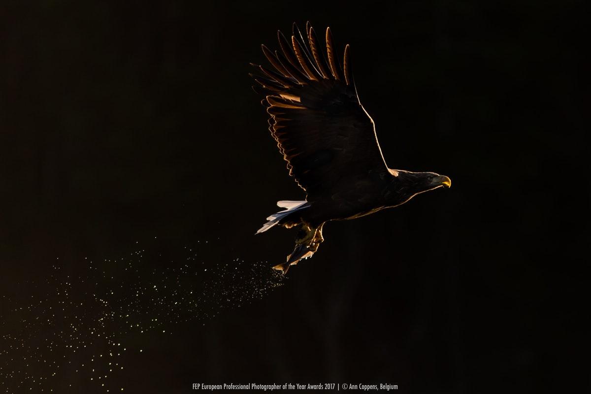 Энн Коппенс, Бельгия / Ann Coppens, Belgium, Победитель в категории «Живая природа», Фотоконкурс «Европейский фотограф года»