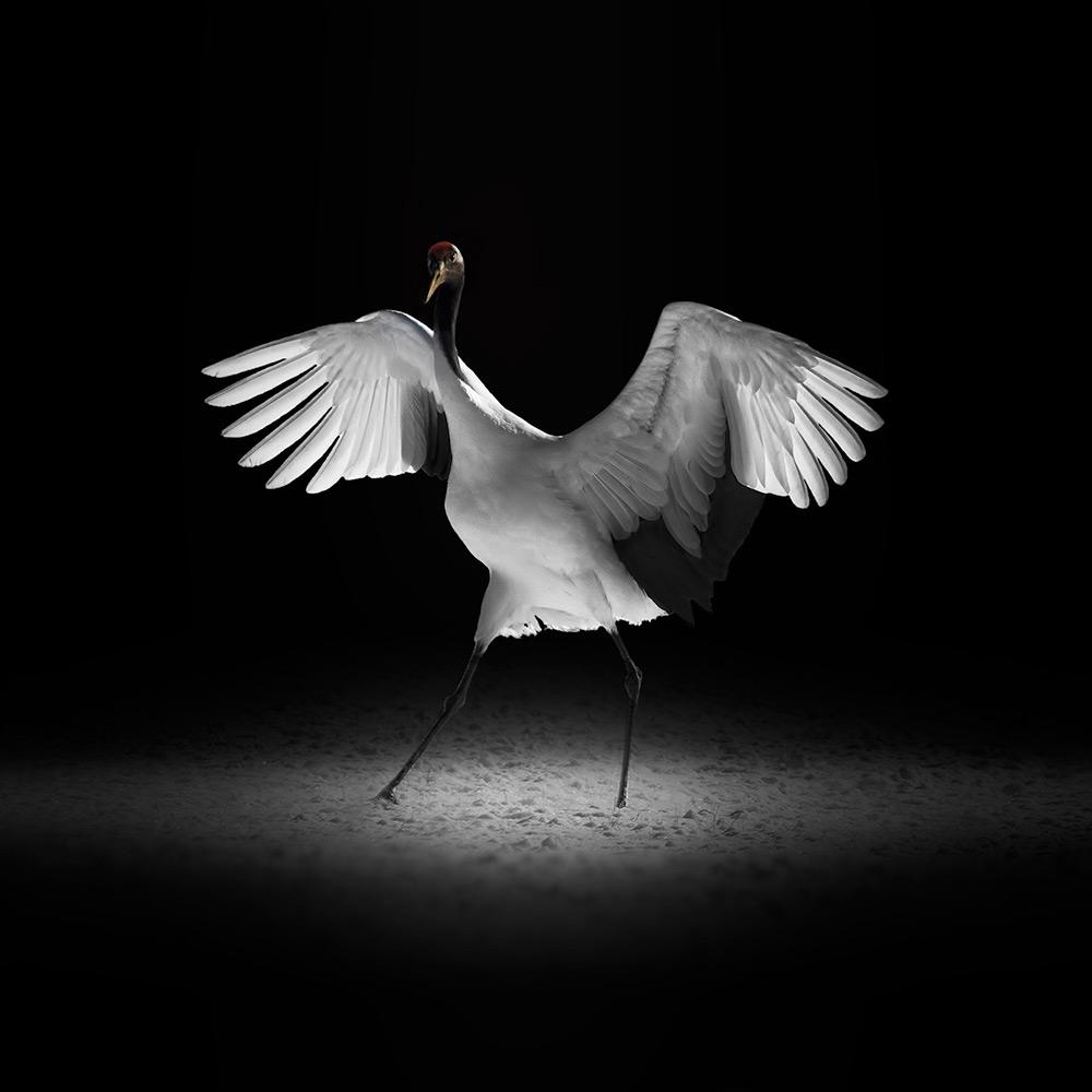 Эрико Канива / Eriko Kaniwa, Победитель в категории «Живая природа / Животные» (профессионал), Фотоконкурс Fine Art Photography Awards