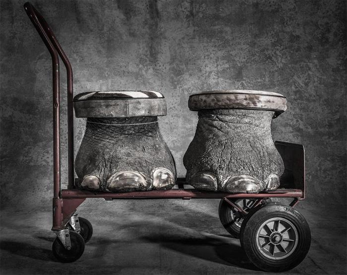 Конфискат, © Бритта Яшинский / Britta Jaschinski, Фотограф года, Фотоконкурс GDT European Nature Photographer