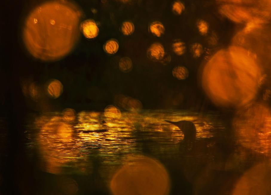 Вечернее настроение у озера Фенленд, © Клаус Тамм / Klaus Tamm, Германия, 1 место в категории «Птицы», Фотоконкурс GDT European Nature Photographer