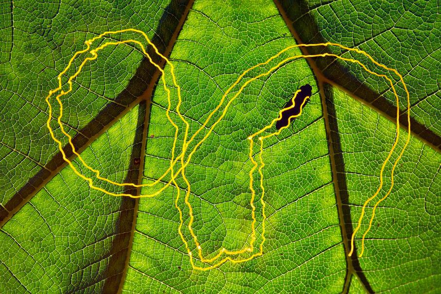 Следуйте по желтой кирпичной дороге!, © Кристобаль Серрано / Cristobal Serrano, Испания, 1 место в категории «Другие животные», Фотоконкурс GDT European Nature Photographer