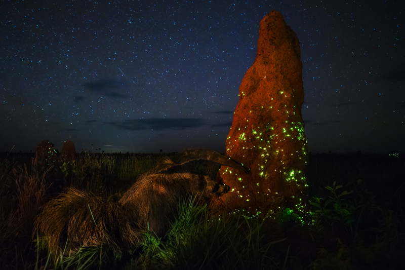 Кабрал Марчио / Cabral, Marcio, Бразилия, Поиск корма с подсветкой, Победитель, Фотоконкурс Glanzlichter