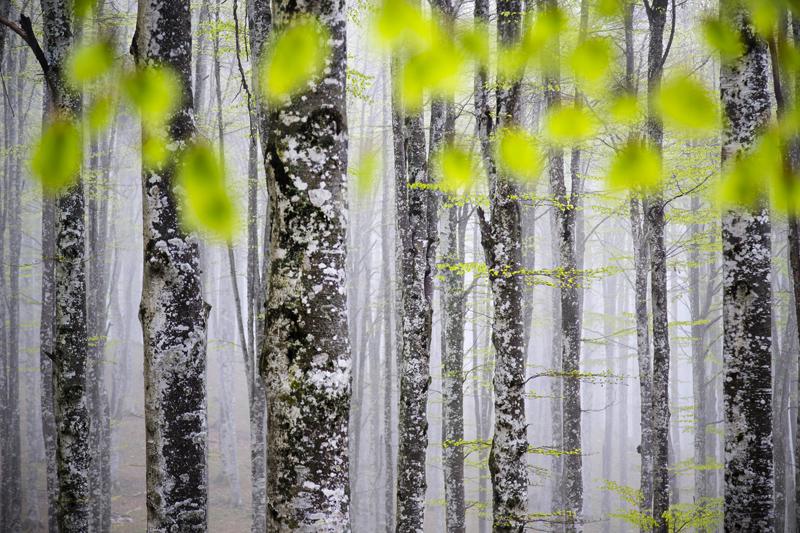 Вендрамин Криштиану / Vendramin, Cristiano, Италия, Магия букового леса, Победитель в категории «Красота растений», Фотоконкурс Glanzlichter