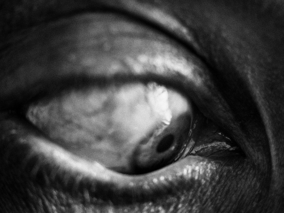 Взгляд в прошлое, © Войцех Гржедзиньский / Wojciech Grzędziński, Финалист конкурса, Фотоконкурс Grand Prix Fotofestiwal
