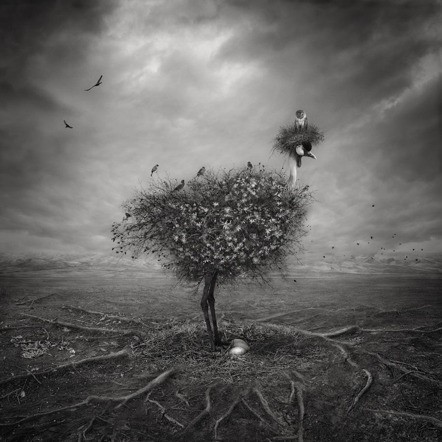 Природа, © Шахрзад Акрами / Shahrzad Akrami, Иран, 1 место в категории «Цифровая обработка», Фотоконкурс HIPA