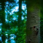 Дэвид Пескенс / David Peskens, Победитель в категории «Живая природа», Фотоконкурс Hasselblad Masters Award 2016