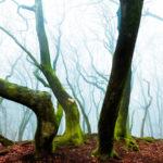 Ларс Ван Де Гоор / Lars Van De Goor, Победитель в категории «Пейзаж», Фотоконкурс Hasselblad Masters Award 2016