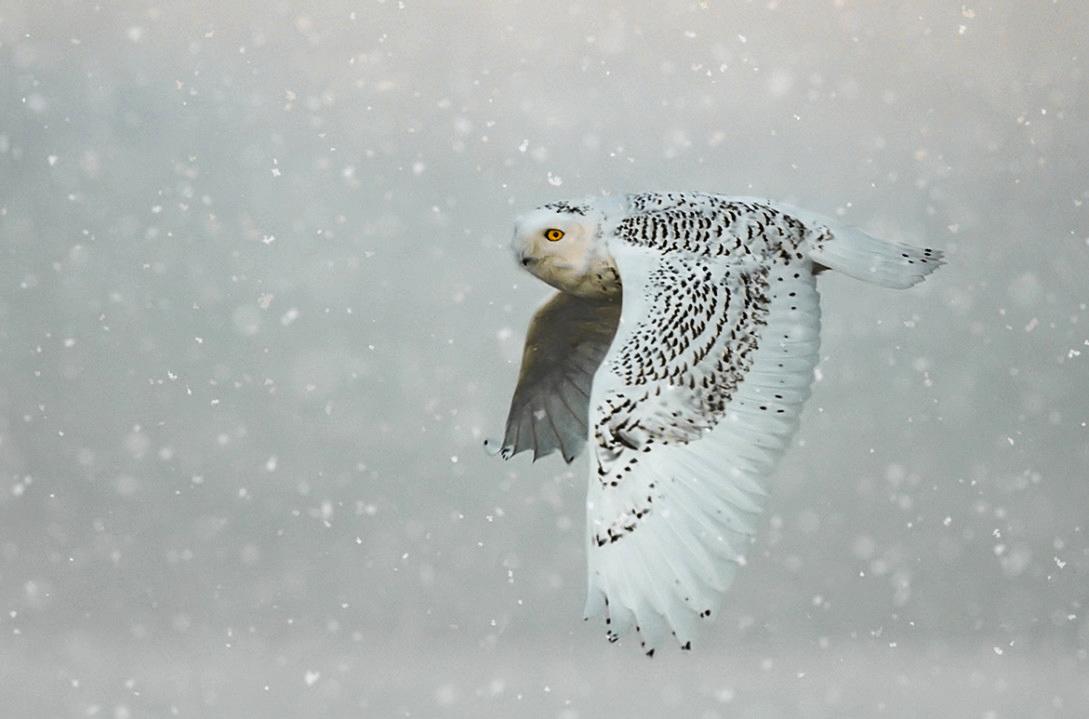 Тема: Птицы, Фотоконкурс I SHOT IT The Best Photo Competition