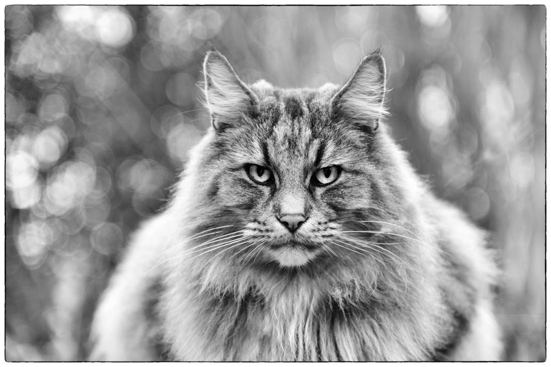 Тема: Кошки, Фотоконкурс I SHOT IT The Best Photo Competition