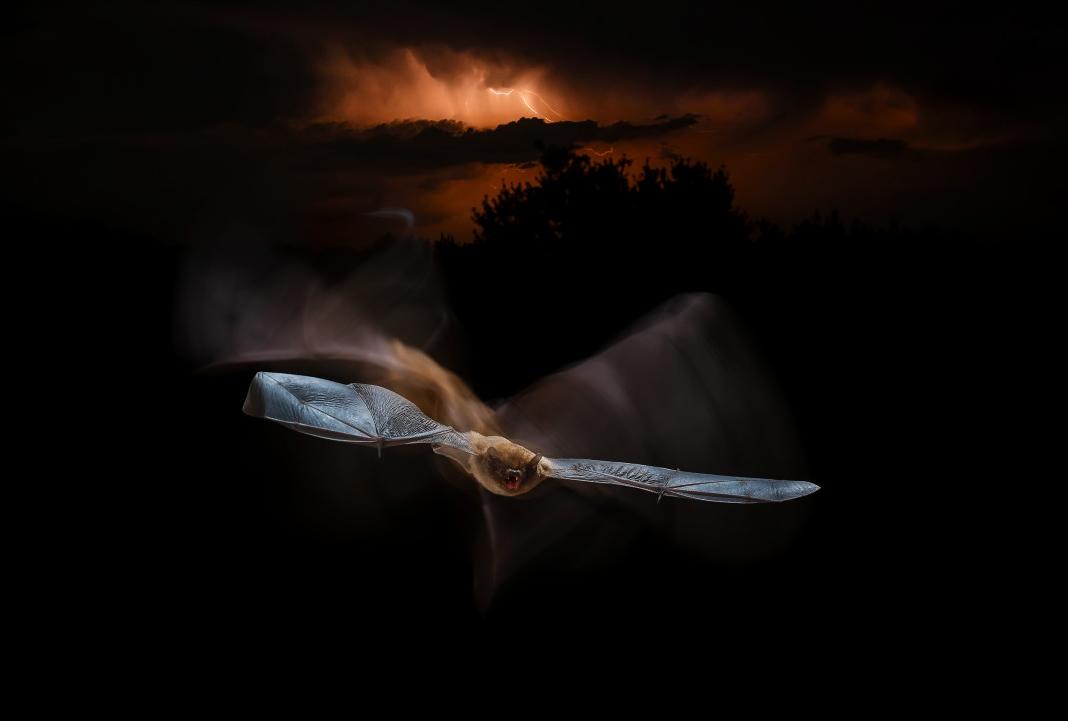 Тема: Живая природа, Фотоконкурс I SHOT IT The Best Photo Competition