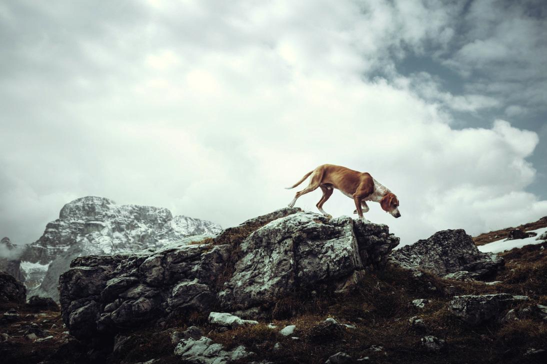 Тема: Собаки, Фотоконкурс I SHOT IT The Best Photo Competition